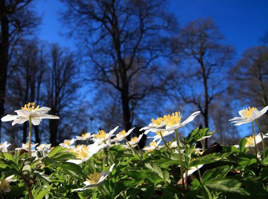 Alimlər karbon-dioksidin floraya təsirlərini araşdırıblar