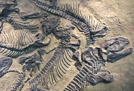 Çinli alimlər 130 milyon yaşı olan dinozavr skeletinin qalıqlarını aşkarlayıblar