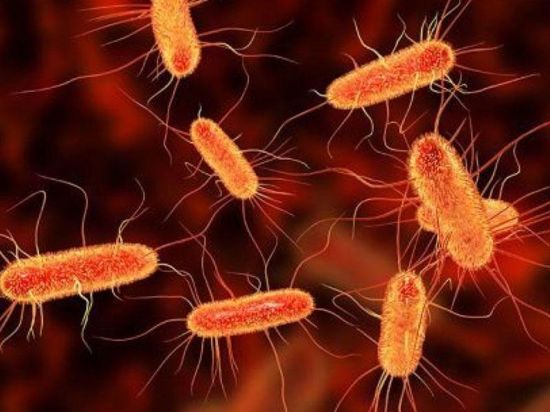 CO2 istehlak edən bakteriya