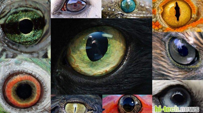 Dünyaya it, böcək və ya balıq gözü ilə baxmağa imkan verən tətbiq