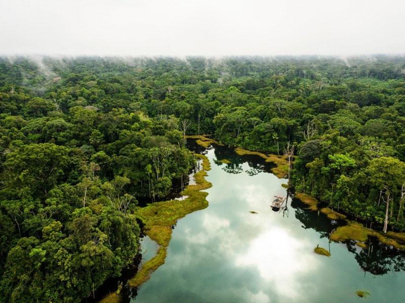 İqlim dəyişikliyi Amazonun tropik meşələrini məhv edə bilər