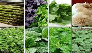 Yaz bitkiləri və onların müalicəvi keyfiyyətləri - FAYDALANIN