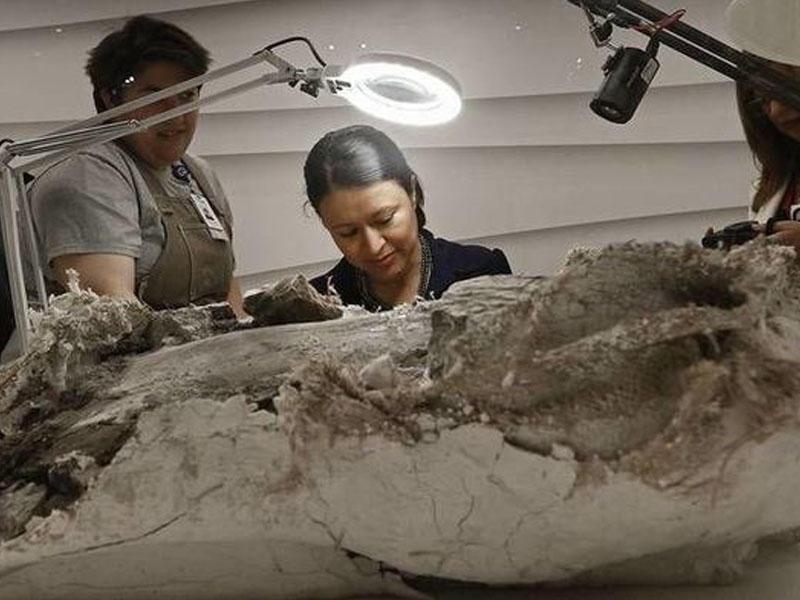 Alimlər 75 milyon il əvvəl yaşamış dinozavrda xərçəng aşkarladılar